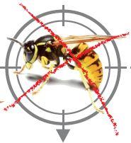Les insectes volants